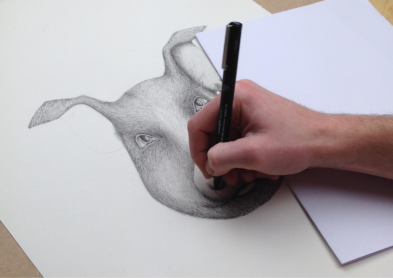Best_Illustration_Unruly_Pig2