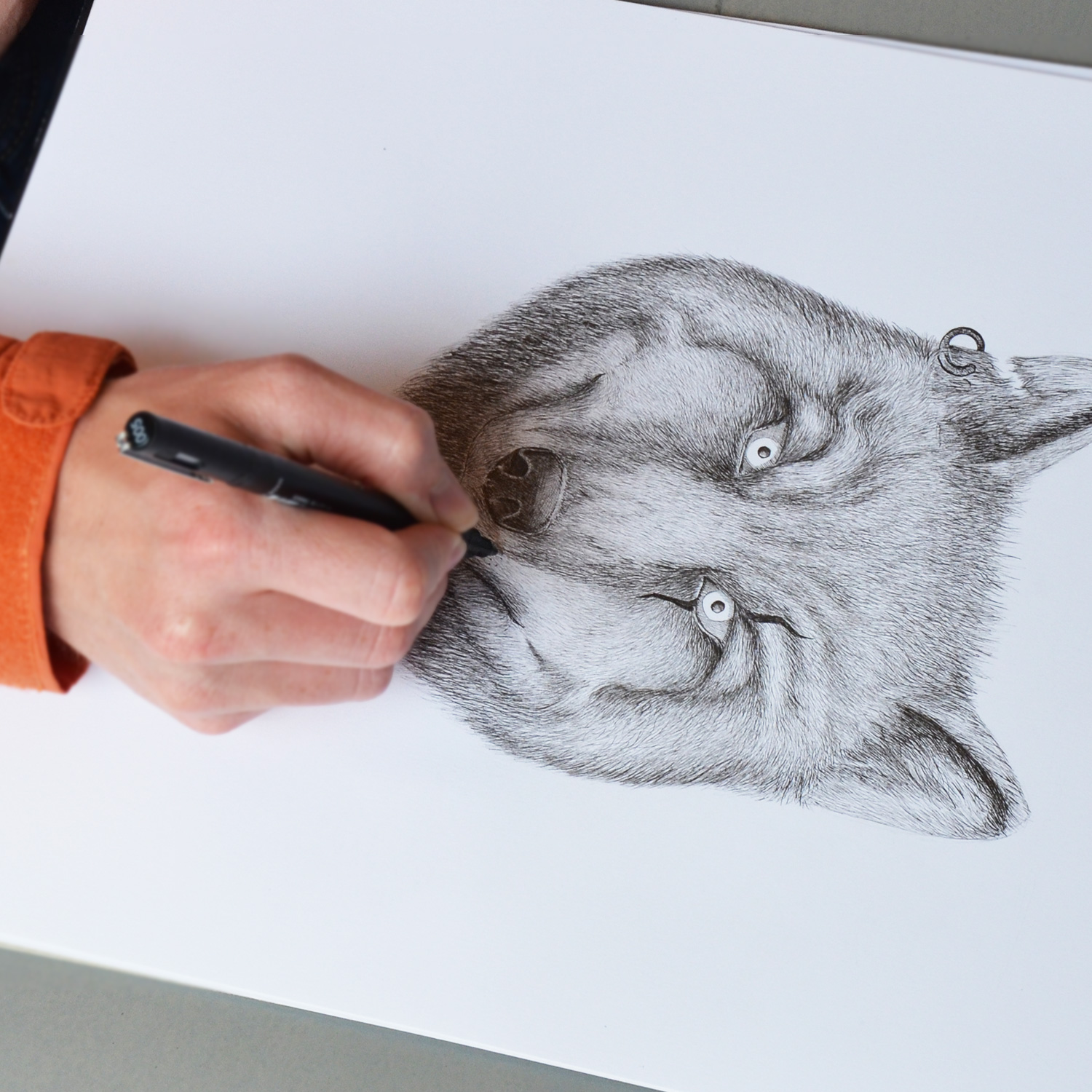 Drawing the Wolff-Evans wolf